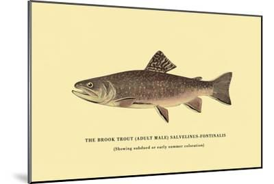 The Brook Trout, Showing Subdued or Early Summer Coloration-H^h^ Leonard-Mounted Art Print