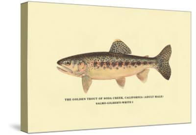 The Golden Trout of Soda Creek-H^h^ Leonard-Stretched Canvas Print