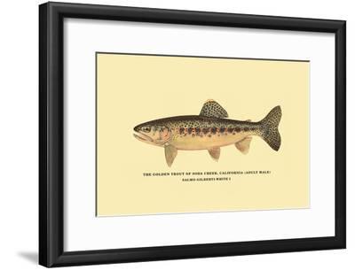 The Golden Trout of Soda Creek-H^h^ Leonard-Framed Art Print