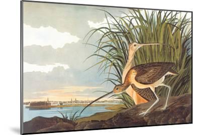 Long-Billed Curlew-John James Audubon-Mounted Art Print