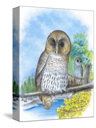 The Barred Owl-Theodore Jasper-Stretched Canvas Print