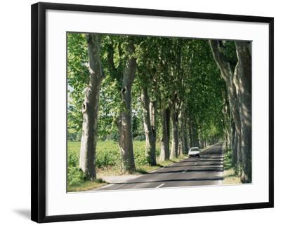 Car on Typical Tree Lined Country Road, Near Pezenas, Herault, Languedoc-Roussillon, France-Ruth Tomlinson-Framed Photographic Print