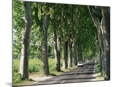 Car on Typical Tree Lined Country Road, Near Pezenas, Herault, Languedoc-Roussillon, France-Ruth Tomlinson-Mounted Photographic Print