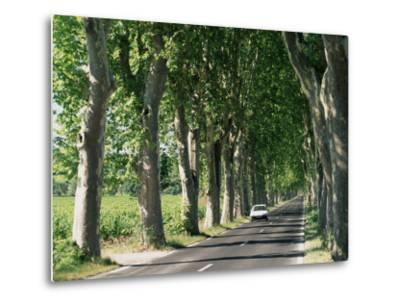 Car on Typical Tree Lined Country Road, Near Pezenas, Herault, Languedoc-Roussillon, France-Ruth Tomlinson-Metal Print