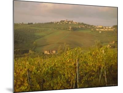 Vineyard, Tuscany, Italy, Europe-Firecrest Pictures-Mounted Photographic Print