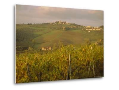 Vineyard, Tuscany, Italy, Europe-Firecrest Pictures-Metal Print