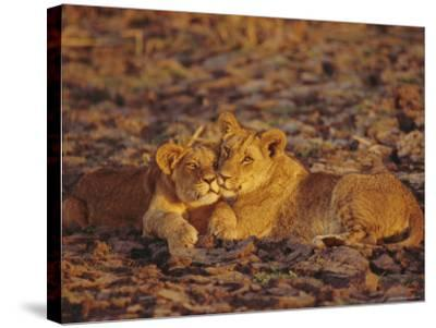 Lioness and Cub, Okavango Delta, Botswana, Africa-Paul Allen-Stretched Canvas Print