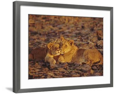 Lioness and Cub, Okavango Delta, Botswana, Africa-Paul Allen-Framed Photographic Print