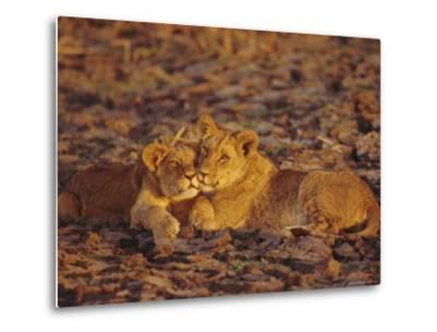 Lioness and Cub, Okavango Delta, Botswana, Africa-Paul Allen-Metal Print