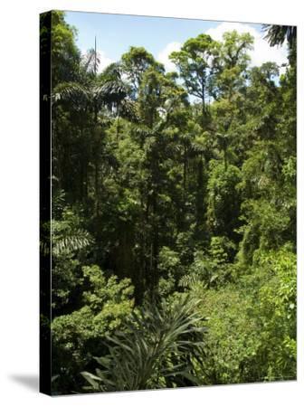 Rainforest Vegitation, Hanging Bridges Walk, Arenal, Costa Rica-Robert Harding-Stretched Canvas Print