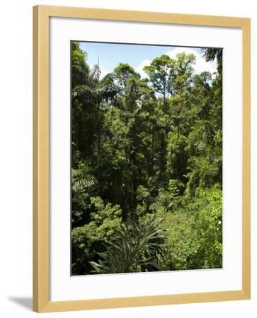 Rainforest Vegitation, Hanging Bridges Walk, Arenal, Costa Rica-Robert Harding-Framed Photographic Print