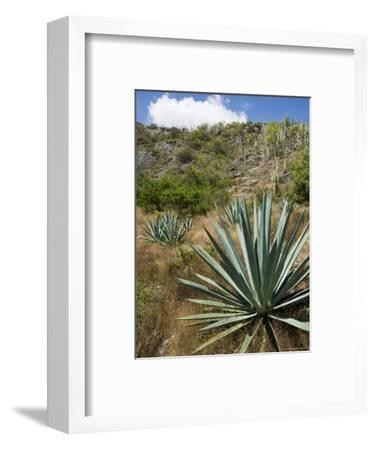Agave Cactus for Making Mezcal, Oaxaca, Mexico, North America-Robert Harding-Framed Photographic Print