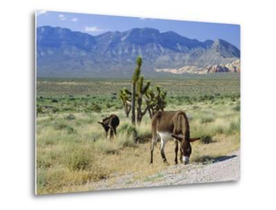 Wild Mules, the Spring Mountains, Nevada, USA-Fraser Hall-Metal Print