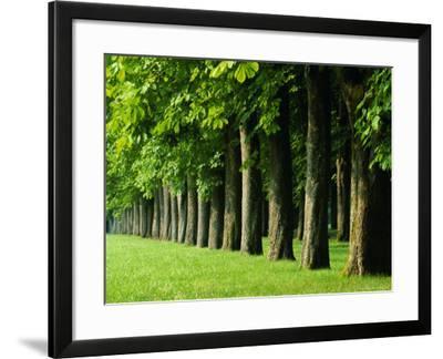 Line of Trees, Touraine, Centre, France, Europe-Sylvain Grandadam-Framed Photographic Print
