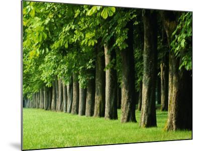 Line of Trees, Touraine, Centre, France, Europe-Sylvain Grandadam-Mounted Photographic Print