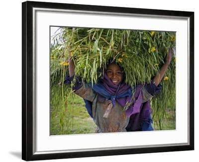 Portait of Local Girl Carrying a Large Bundle of Wheat and Yellow Meskel Flowers, Ethiopia-Gavin Hellier-Framed Photographic Print