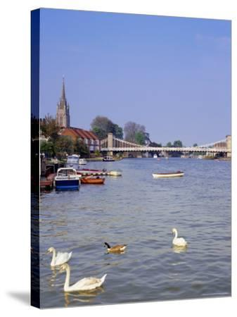 Swans on the River Thames with Suspension Bridge in the Background, England, UK-Charles Bowman-Stretched Canvas Print