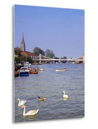 Swans on the River Thames with Suspension Bridge in the Background, England, UK-Charles Bowman-Metal Print