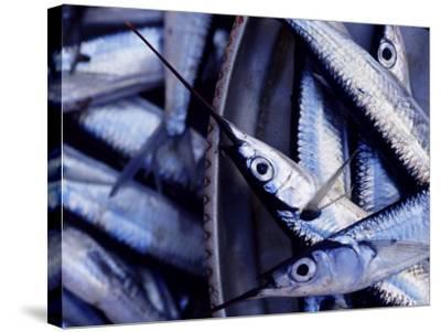 Fish Market, Stone Town, Island of Zanzibar, Tanzania, East Africa, Africa-Yadid Levy-Stretched Canvas Print