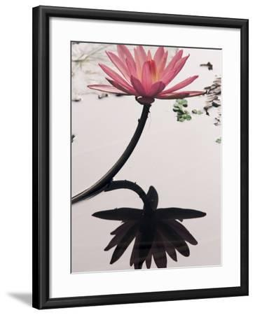 Lotus Flower, Luang Prabang, Laos, Indochina, Southeast Asia, Asia-Colin Brynn-Framed Photographic Print