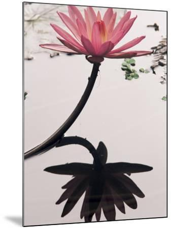 Lotus Flower, Luang Prabang, Laos, Indochina, Southeast Asia, Asia-Colin Brynn-Mounted Photographic Print