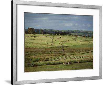 Farmland Near Willunga, Fleurieu Peninsula, South of Adelaide, South Australia, Australia, Pacific-Robert Francis-Framed Photographic Print