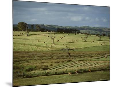 Farmland Near Willunga, Fleurieu Peninsula, South of Adelaide, South Australia, Australia, Pacific-Robert Francis-Mounted Photographic Print