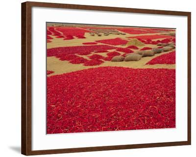Picked Red Chilli Peppers Laid out to Dry, Rajasthan, India-Bruno Morandi-Framed Photographic Print