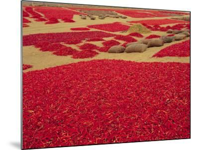 Picked Red Chilli Peppers Laid out to Dry, Rajasthan, India-Bruno Morandi-Mounted Photographic Print