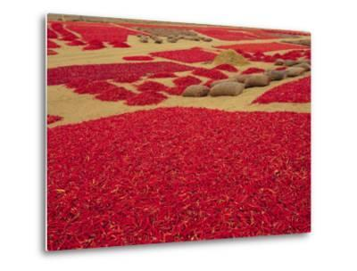 Picked Red Chilli Peppers Laid out to Dry, Rajasthan, India-Bruno Morandi-Metal Print