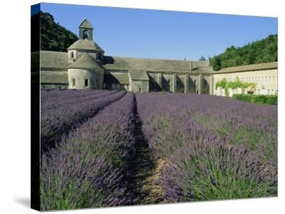 Rows of Lavender at the Abbaye De Senanque, Vaucluse, Provence, France, Europe-Bruno Morandi-Stretched Canvas Print