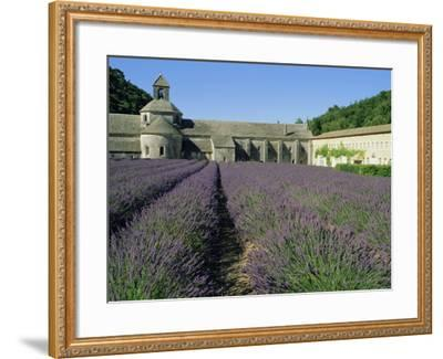 Rows of Lavender at the Abbaye De Senanque, Vaucluse, Provence, France, Europe-Bruno Morandi-Framed Photographic Print