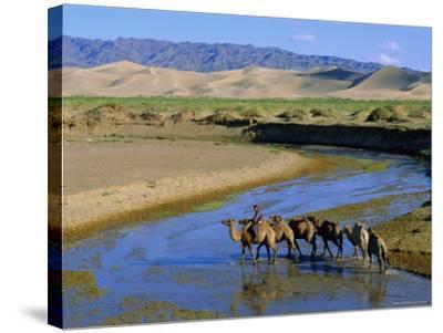 Camel Caravan, Khongoryn Els Dune, Gobi Desert National Park, Omnogov, Mongolia-Bruno Morandi-Stretched Canvas Print