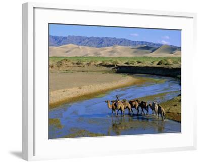 Camel Caravan, Khongoryn Els Dune, Gobi Desert National Park, Omnogov, Mongolia-Bruno Morandi-Framed Photographic Print