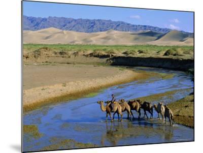 Camel Caravan, Khongoryn Els Dune, Gobi Desert National Park, Omnogov, Mongolia-Bruno Morandi-Mounted Photographic Print