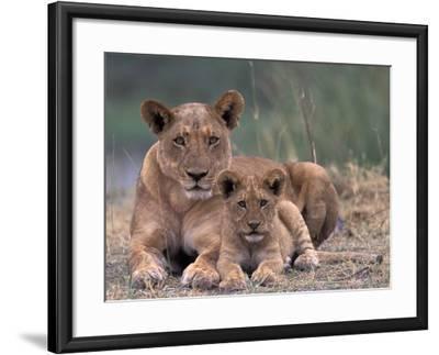 Lions, Okavango Delta, Botswana-Art Wolfe-Framed Photographic Print