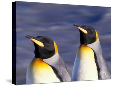 Pair of King Penguins with Rushing Water, South Georgia Island-Art Wolfe-Stretched Canvas Print