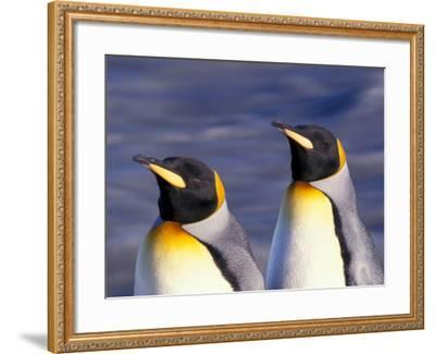Pair of King Penguins with Rushing Water, South Georgia Island-Art Wolfe-Framed Photographic Print