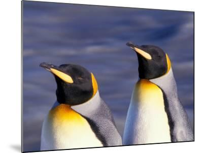 Pair of King Penguins with Rushing Water, South Georgia Island-Art Wolfe-Mounted Photographic Print
