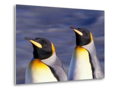 Pair of King Penguins with Rushing Water, South Georgia Island-Art Wolfe-Metal Print