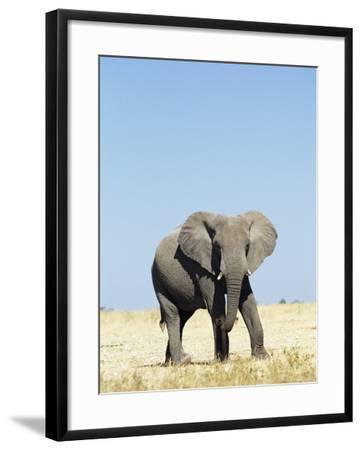Bull African Elephants, Loxodonta Africana, Etosha National Park, Namibia, Africa-Ann & Steve Toon-Framed Photographic Print