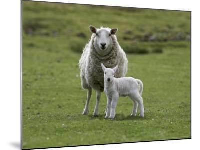 Ewe with Lamb, Scotland, United Kingdom, Europe-Ann & Steve Toon-Mounted Photographic Print