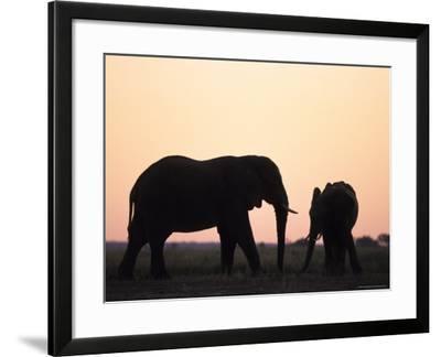 African Elephant, (Loxodonta Africana), Chobe River, Chobe National Park, Botswana-Thorsten Milse-Framed Photographic Print