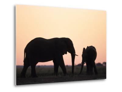 African Elephant, (Loxodonta Africana), Chobe River, Chobe National Park, Botswana-Thorsten Milse-Metal Print