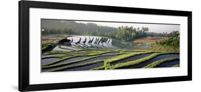 Agricultural Landscape of Rice Fields and Terraces, Indonesia, Southeast Asia-Bruno Morandi-Framed Photographic Print