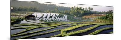 Agricultural Landscape of Rice Fields and Terraces, Indonesia, Southeast Asia-Bruno Morandi-Mounted Photographic Print