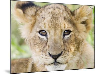 Head on Shot of Lion Cub Looking at Camera, Masai Mara Game Reserve, Kenya, East Africa, Africa-James Hager-Mounted Photographic Print