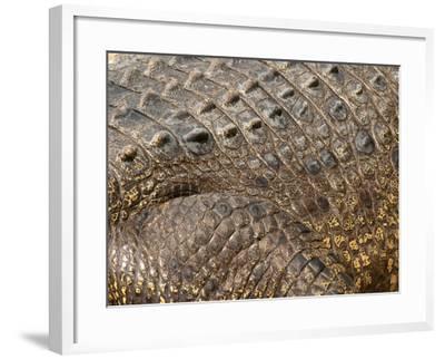 Detail of Crocodile Skin, Australia-David Wall-Framed Photographic Print