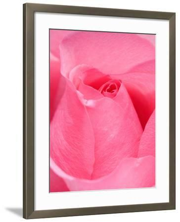 Rose-Jamie & Judy Wild-Framed Photographic Print