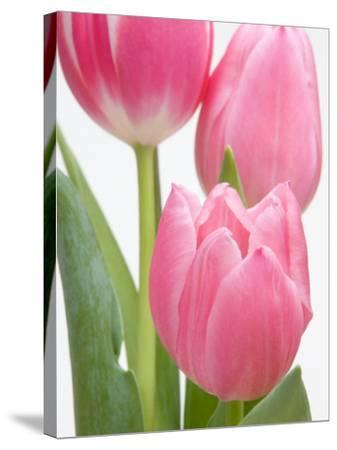 Pink Tulips-Jamie & Judy Wild-Stretched Canvas Print